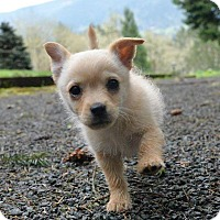Adopt A Pet :: Teddy - Eugene, OR