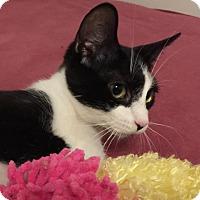 Adopt A Pet :: Debra - Herndon, VA