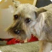 Adopt A Pet :: Lakota - North Benton, OH