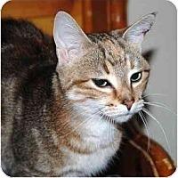Adopt A Pet :: Maisie - Markham, ON