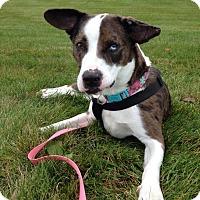Adopt A Pet :: Penny - Laingsburg, MI