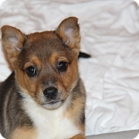 Adopt A Pet :: Marinara - Phoenix, AZ