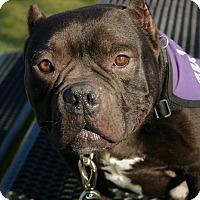 Adopt A Pet :: Mugsy - Lincoln, CA