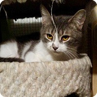 Adopt A Pet :: Midge - THORNHILL, ON