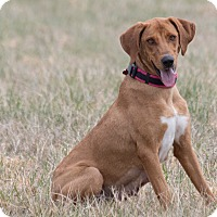 Adopt A Pet :: Ava - Broken Arrow, OK