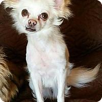 Adopt A Pet :: BIANCA - Franklin, TN