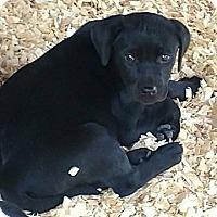 Adopt A Pet :: Hana (adoption pending) - Ellaville, GA