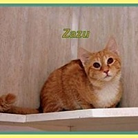 Adopt A Pet :: Zazu - Berkeley Springs, WV