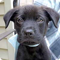 Adopt A Pet :: Rico - Baton Rouge, LA