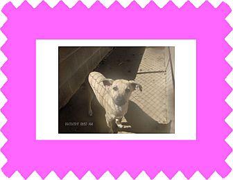 Spaniel (Unknown Type) Mix Dog for adoption in KELLYVILLE, Oklahoma - AXEL