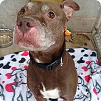Adopt A Pet :: Covah - Pottsville, PA