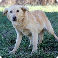 Adopt A Pet :: Robin - Waldorf, MD