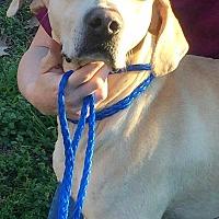 Adopt A Pet :: Union - Demopolis, AL
