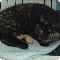 Adopt A Pet :: No Name Yet - Westfield, MA