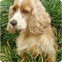 Adopt A Pet :: Prairie Marie - Sugarland, TX