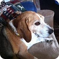 Adopt A Pet :: Donner - Phoenix, AZ