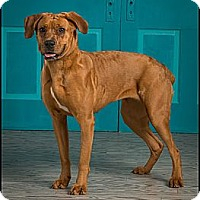 Adopt A Pet :: Shelby - Owensboro, KY