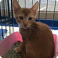 Adopt A Pet :: Mason - Santa Monica, CA