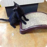 Adopt A Pet :: Sparkle - Lake Charles, LA