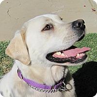 Adopt A Pet :: Duke - Yucaipa, CA
