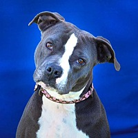 Adopt A Pet :: Female Frankie - Toluca Lake, CA