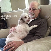 Adopt A Pet :: Edie - Sheridan, OR