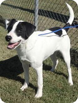 Labrador Retriever Mix Dog for adoption in Olive Branch, Mississippi - Rhett