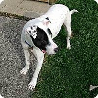 Adopt A Pet :: Pongo - Laingsburg, MI