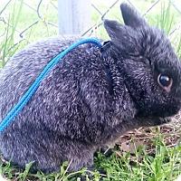 Adopt A Pet :: JASPER - Elyria, OH