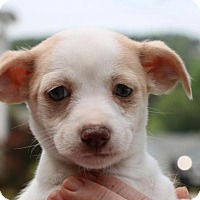 Adopt A Pet :: Arista - Monroe, GA