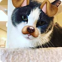 Adopt A Pet :: Bam Bam - Newland, NC