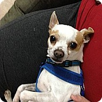 Adopt A Pet :: Petey - Miami, FL