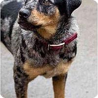 Adopt A Pet :: Desie - Portland, OR