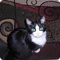 Adopt A Pet :: Susie - Modesto, CA