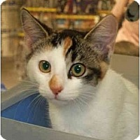 Adopt A Pet :: Layla - Fort Lauderdale, FL
