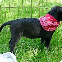 Adopt A Pet :: Missy big personality - Sacramento, CA