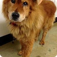 Adopt A Pet :: King - Toledo, OH