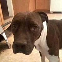 Adopt A Pet :: RAMBO - Chandler, AZ