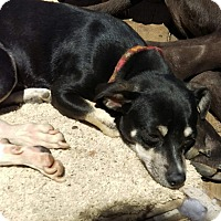 Adopt A Pet :: Roscoe - Charlestown, RI