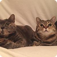 Adopt A Pet :: Winky - New York, NY