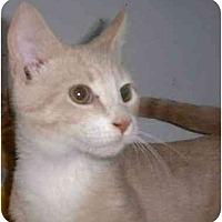 Adopt A Pet :: Ozzie - Stuarts Draft, VA