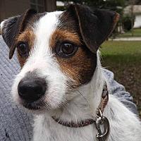 Adopt A Pet :: Dixie - Lutz, FL