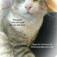 Adopt A Pet :: Treasure - Marlboro, NJ