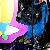 Adopt A Pet :: Lownly Boy - Harrisburg, NC
