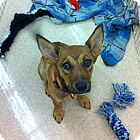Adopt A Pet :: Colton - Silsbee, TX