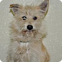Adopt A Pet :: Kipper - Port Washington, NY