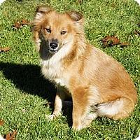 Adopt A Pet :: Regal Rebecca - Brooklyn, NY