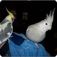 Adopt A Pet :: SPIKE & LACEY - Mantua, OH