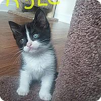 Adopt A Pet :: Kyle - McDonough, GA