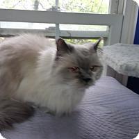 Adopt A Pet :: Reilly - Fairborn, OH